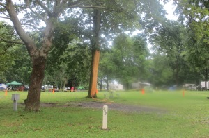 This is the tree that was hit by lightning the night before